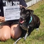 A person in a black ADA 30 t-shirt holds up a sign saying AN ACCESSIBLE WORLD IS AN EQUAL + INCLUSIVE WORLD! while kneeling next to a dog.